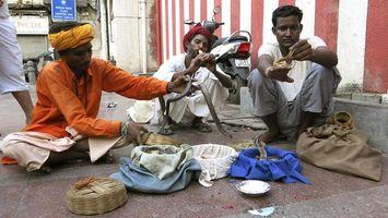 La India celebra el festival hind� de las serpientes