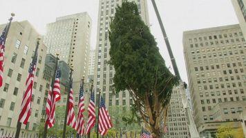 Colocan �rbol de Navidad del Centro Rockefeller en Nueva York