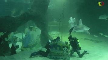 La Navidad con tiburones en el zool�gico de Madrid