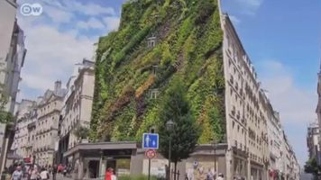 """'Jardines verticales"""", viven sin necesidad de tierra"""